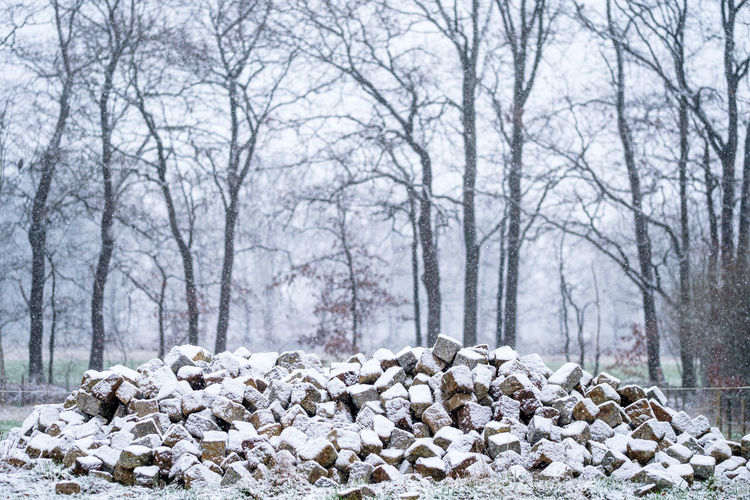 Stack of stones on snow covered land in forest