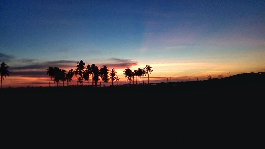Sunset 🌄 Coruripe Alagoas Nordeste  Sunset Tree Sunset Silhouette Riding Sky Landscape First Eyeem Photo