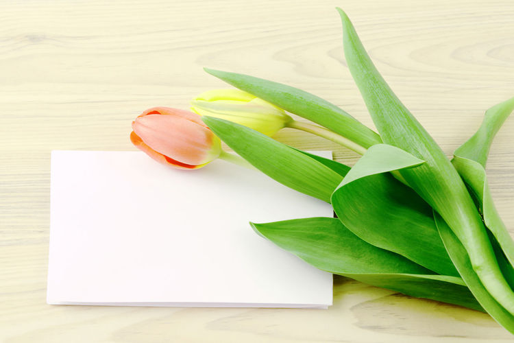 bunch of tulips beside a greetings card with copy space Card Copy Space Copyspace Flower Indoors  Notice Table Tulips Tulips🌷 Wood - Material