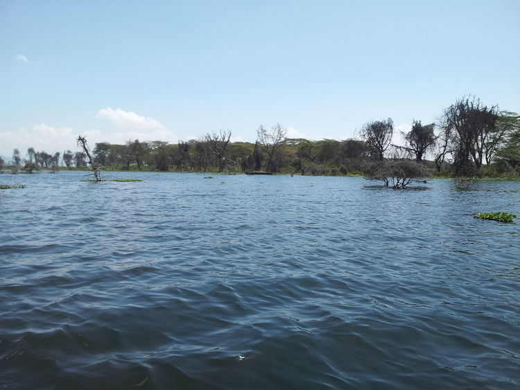 Lake Naivasha Beauty In Nature Lake Lakeshore Outdoors Rippled Tranquil Scene Water Water Surface