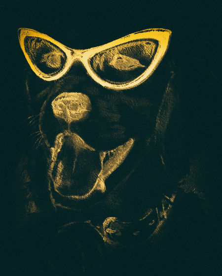 Helldog Dog Helldog Hell Yellow Animal Face Funny Funny Faces FUNNY ANIMALS ArtWork Art Indoors  Close-up No People Still Life Studio Shot Glasses Spooky Single Object Creativity Representation Art And Craft Halloween Black Background Sign High Angle View Bone  Human Skeleton Personal Accessory
