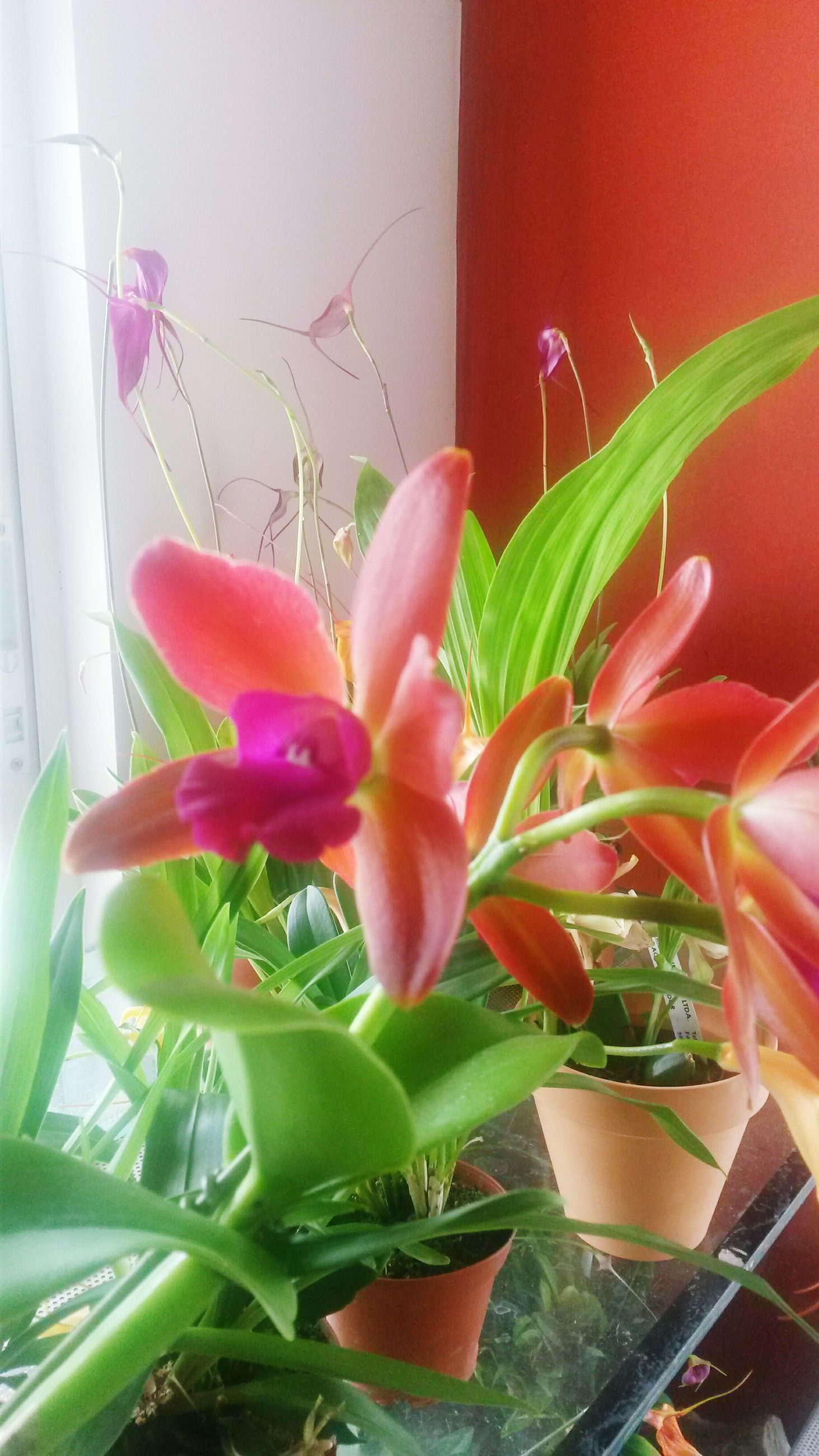 flower, petal, freshness, fragility, growth, flower head, plant, potted plant, indoors, beauty in nature, leaf, nature, close-up, blooming, vase, stem, home interior, wall - building feature, in bloom, window