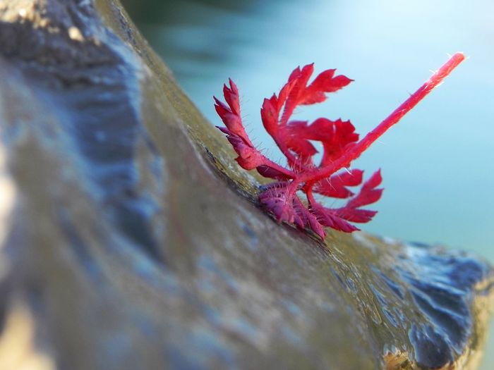 Red leaf lying at a wet stone Beauty In Nature Close-up Day Drop Fall Down Falling Flower Flower Head Fragility Grey Stone Growth Lake Nature No People Outdoors Plant Red Red Leaf Shining Slippery Spa Stone Water Wet Wet Stone