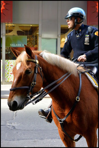 Human and animal teamwork in NYC Battle Of The Cities Big City Life Domestic Animals Horse Horse In The City Horserider Humanandanimal New York New York City New York City Photos NYPD Police At Work Police Horse Police Horses Policeman Side View Street Photography Working Animal Working Animals