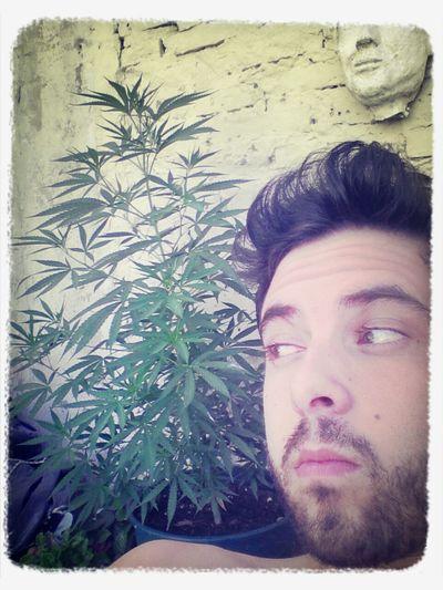 verde que te quiero verde Ganja Cannabis Autocultivo