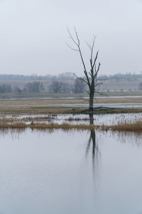 Landsscape photography in the area of Oderbruch in Germany. Ice Tree Bare Tree Bare Trees Beauty In Nature Cold Day Landscape Lone Nature No People Outdoors Scenics Sky Tranquil Scene Tranquility Tree Water Waterfront