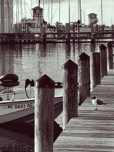 Black And White Blackandwhite Photography Built Structure Architecture Water Travel Destinations Bridge - Man Made Structure Day Outdoors No People Wood - Material Animal Themes Animals In The Wild Bird Nature Sky