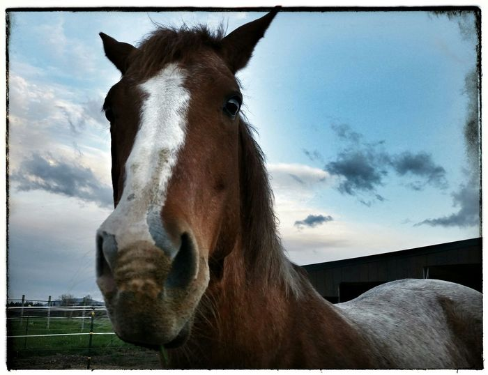 Horse The New Boarder Sweetie