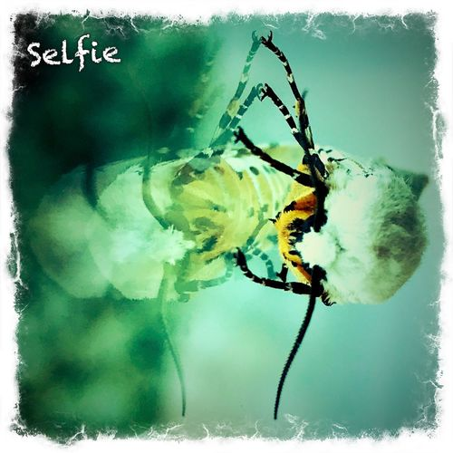 Self-reflection Iphoneonly Iphonephotography IPhone Photography IPhoneography Close-up Auto Post Production Filter Animal Invertebrate Animal Themes One Animal Insect