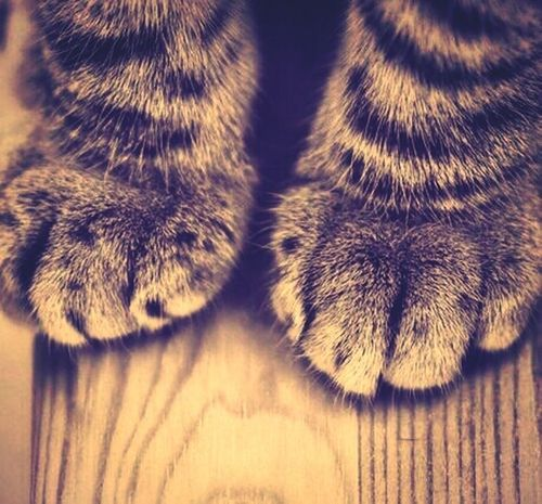 Sweet Cat Feets