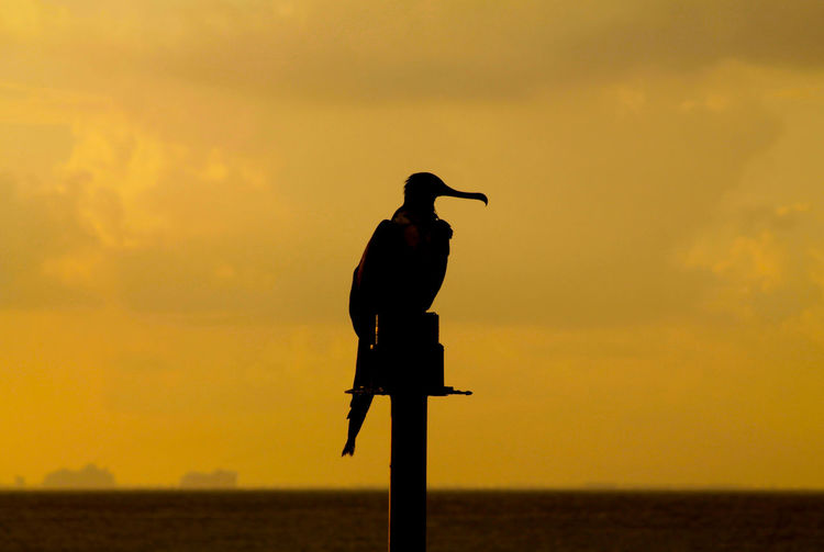 Silhouette bird perching on wooden post