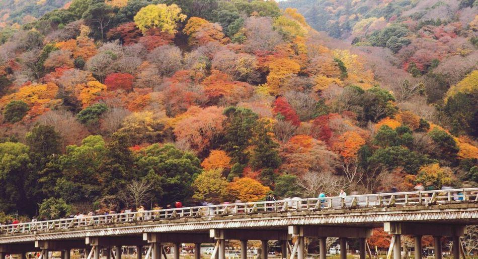 Arashiyama Kyoto Togetukyou Japan 嵐山 京都 日本 紅葉 渡月橋