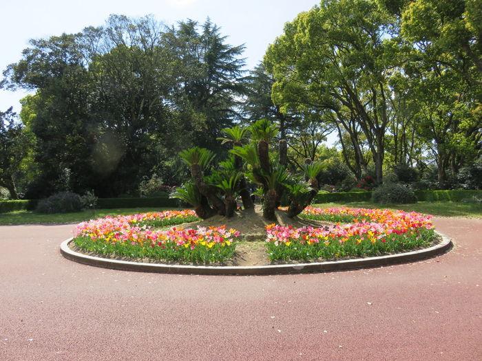 花壇 はな 花 風景 自然