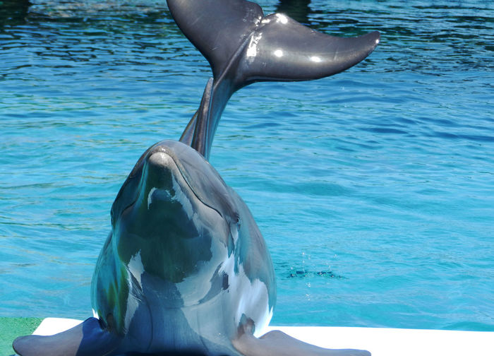 Animal Themes Animals In The Wild Dolphin Nature Sea First Eyeem Photo