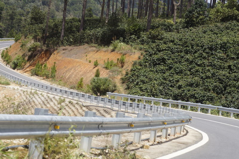 Bridge - Man Made Structure Curve Day Growth Mountain Nature No People Outdoors Railing Road The Way Forward Tree Winding Road