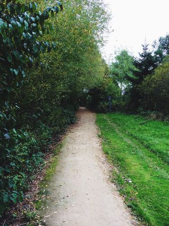 Beauty In Nature Day Diminishing Perspective Footpath Garden Grassy Green Green Color Growth Long Narrow Nature No People Non-urban Scene Outdoors Park Plant Remote Scenics The Way Forward Tranquil Scene Tranquility Tree Vanishing Point