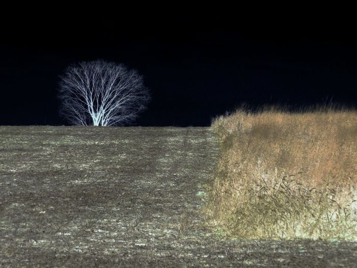 LONELY TREE EyeEmNewHere Beauty In Nature Field Field And Sky Grass Landscape Lonely Tree In Field Nature Night No People Outdoors Plowed Land Sky