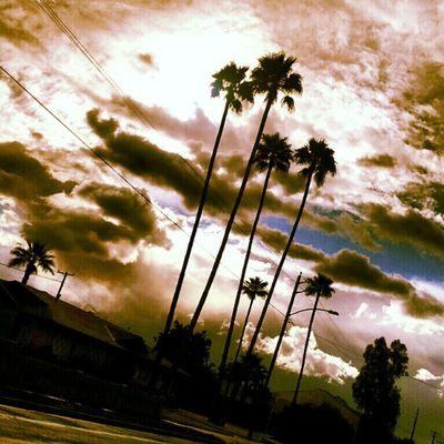 Instagramaz Phoenixaz Sunsetsgram Sunsets Desertlivin Powerline Horizon Palmtrees Blueskies Awesomeclouds Cloudporn Insaneweatherinphx Driving
