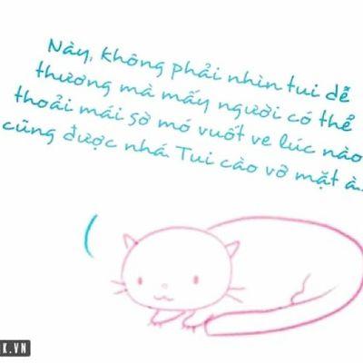 Cat Quotes ha ha. Đừng nhờn vs chụy Meo