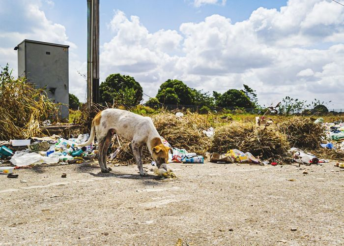 View of an abandoned dog on the road