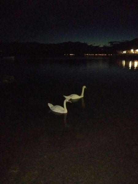 Cigni Night Lake No People Animal Wildlife Outdoors Water Scenics Animals In The Wild Bird Tranquility Lago Di Viverone Biellese. Animal Themes Landscape Residential Building Silhouette Built Structure