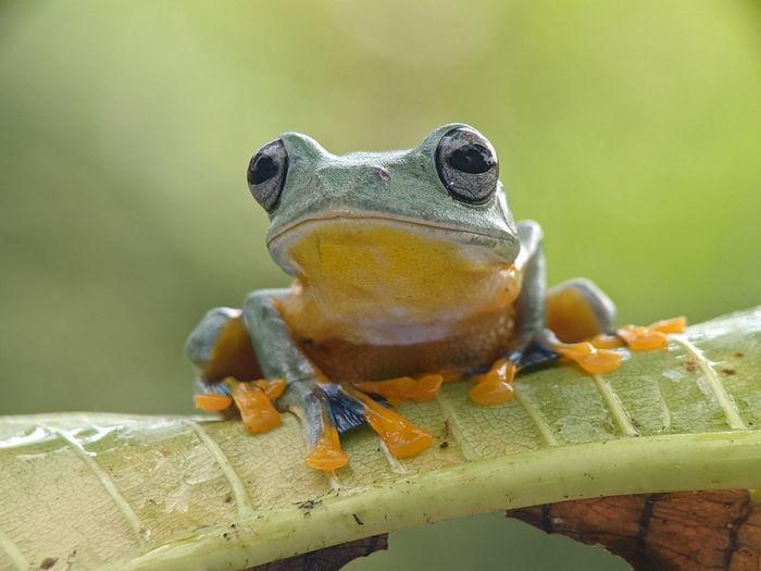 Close-up portrait of a frog