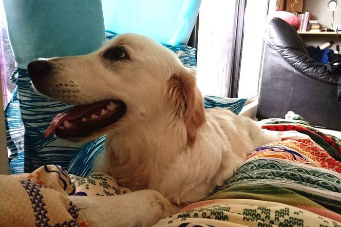 Pets Dog Animal Themes One Animal Domestic Animals Mammal Close-up Day Human Body Part Indoors  Yawning People