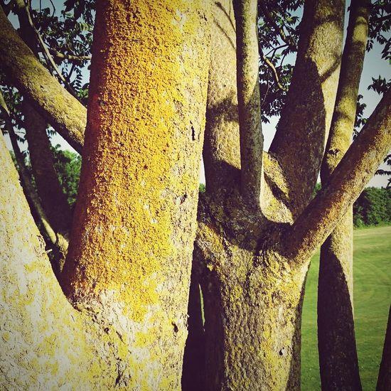 Golfing Hugging A Tree