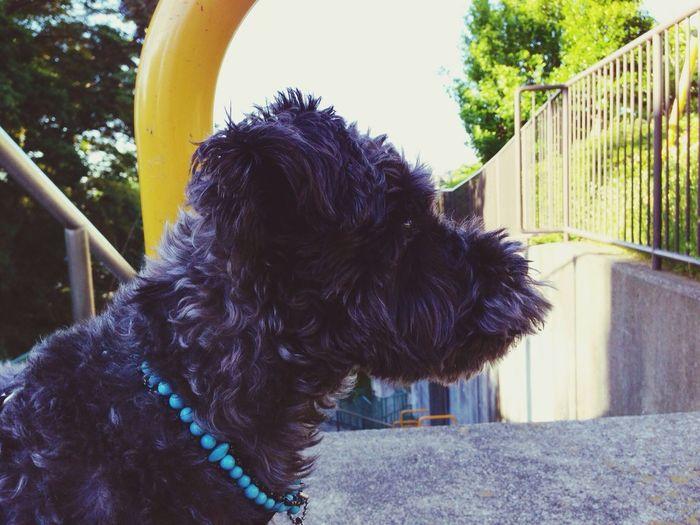 おはよう!(^^) Good Morning Hello World Dog