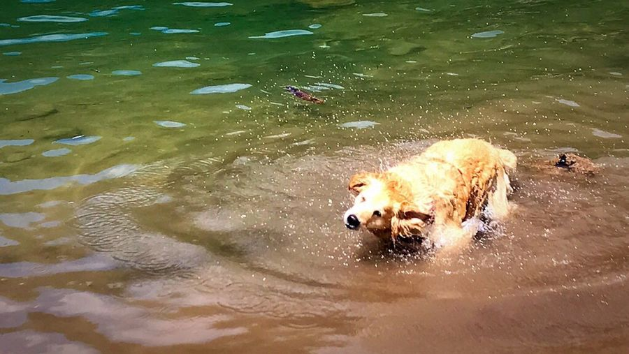 My bestfriend forever!❤️ Mybestfriend Lovemydog Mydog♡ Golden Retriever Goldenretriever Water Lake Bath Time Domestic Animals Animal Themes Dog Outdoors Mountainlife Sunnyday Pet Portraits Pet Portraits