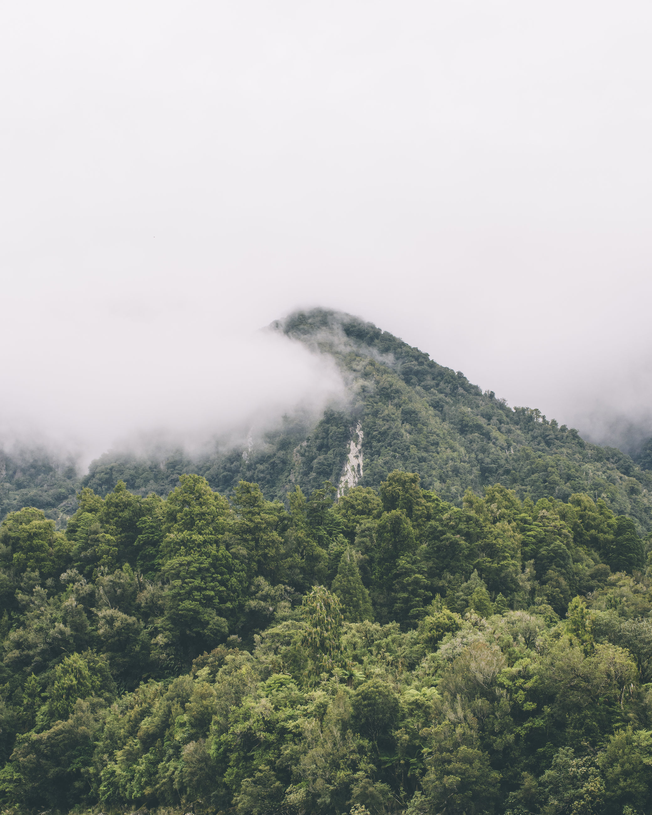 fog, foggy, tranquil scene, tranquility, scenics, beauty in nature, mountain, tree, nature, weather, landscape, growth, copy space, non-urban scene, idyllic, sky, green color, high angle view, mist
