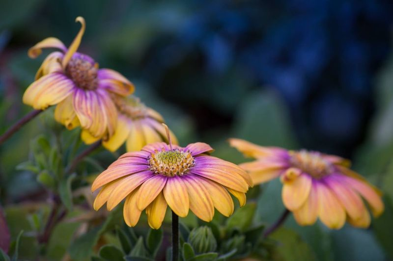 Pink and Orange Flowers Flower Fragility Petal Freshness Nature Beauty In Nature Flower Head Growth Blooming Focus On Foreground Plant Purple No People Day Pink Color Outdoors Close-up Eastern Purple Coneflower