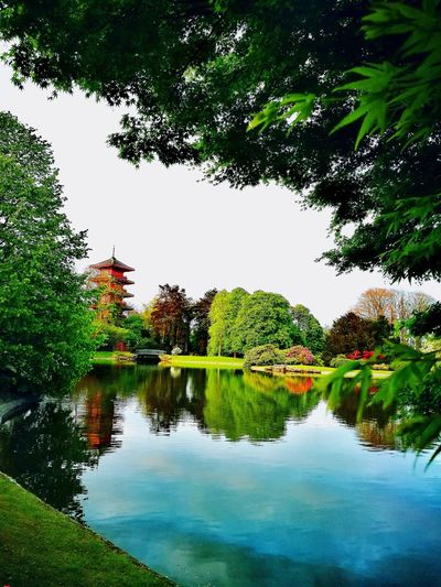 Water Nature Beauty In Nature Tree Lake Day Tranquility Serres De Laeken (Brussels). Reflection