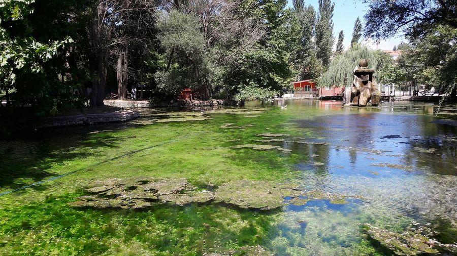 Sarıkız, Domaniç Kütahya Türkiye Tarih  Antik Domaniç Kütahya Turkey Sarıkız EyeEm Selects Alabalik Stream Woods Green
