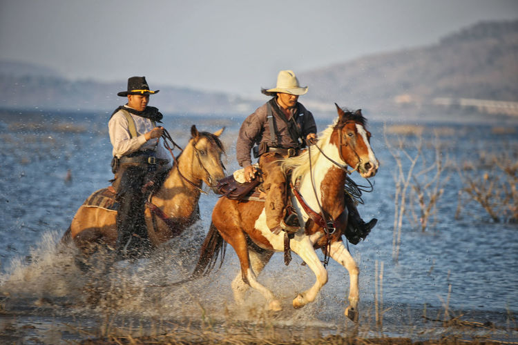 Mammal Domestic Animals Water Domestic Animal Wildlife Group Of Animals Hat Horse Nature People Riding Ride Livestock Horseback Riding Clothing Men Full Length Pets Cowboy Cowboy Hat Outdoors
