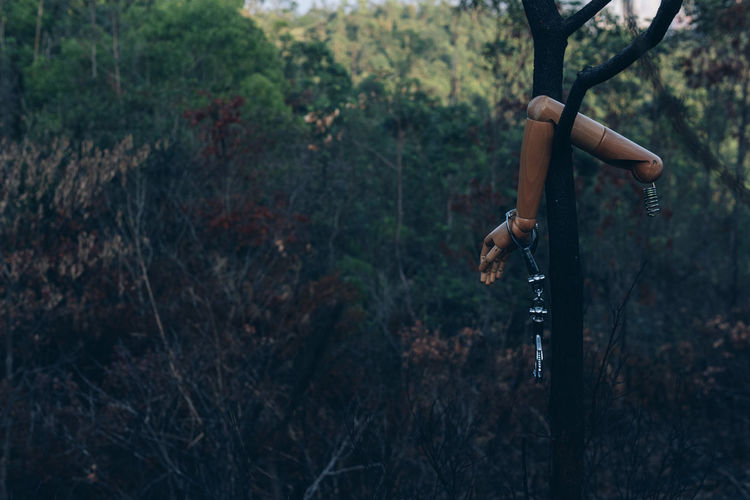 Close-up of mannequin hanging on tree against forest