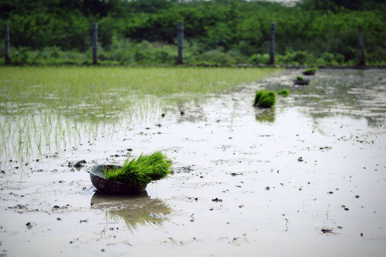 Scenic view of lake seen through wet land