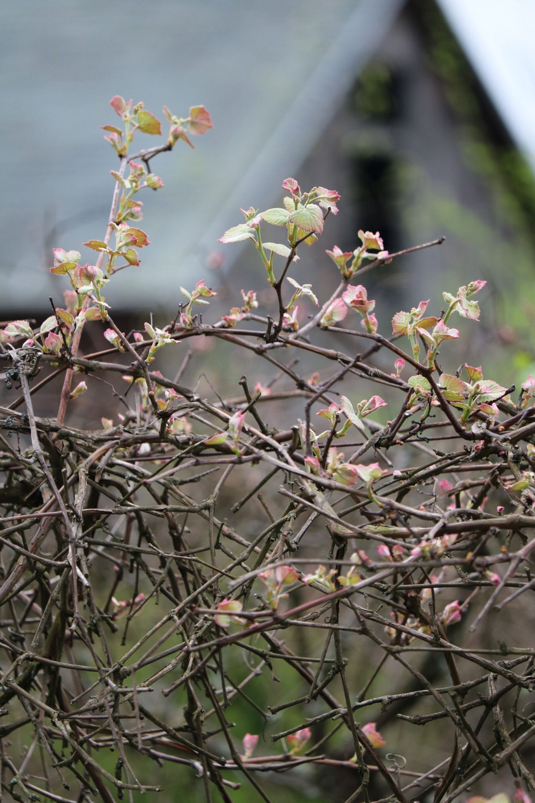 growth, branch, nature, plant, tree, no people, day, flower, beauty in nature, outdoors, fragility, focus on foreground, freshness, close-up