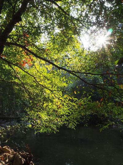 Sunlight streaming through trees in lake