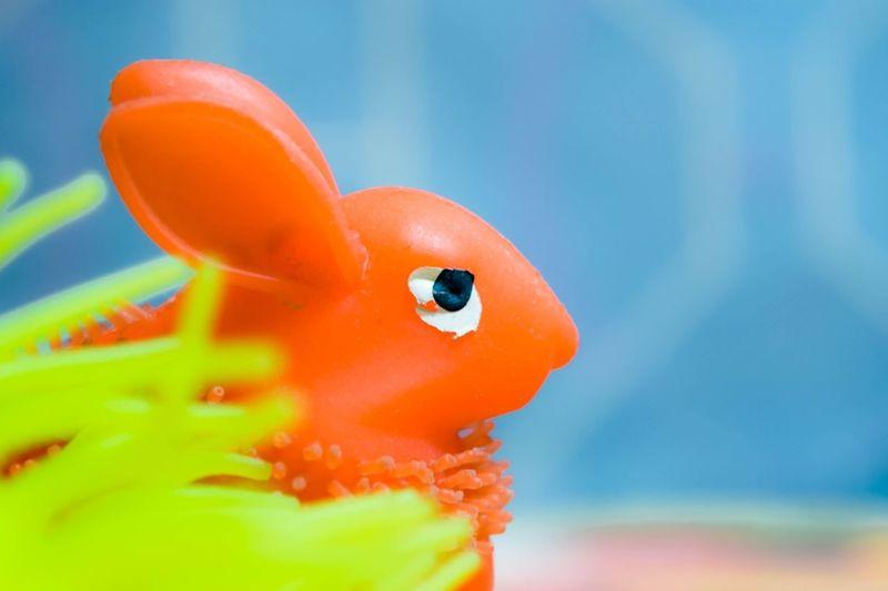 Close-up of orange toy