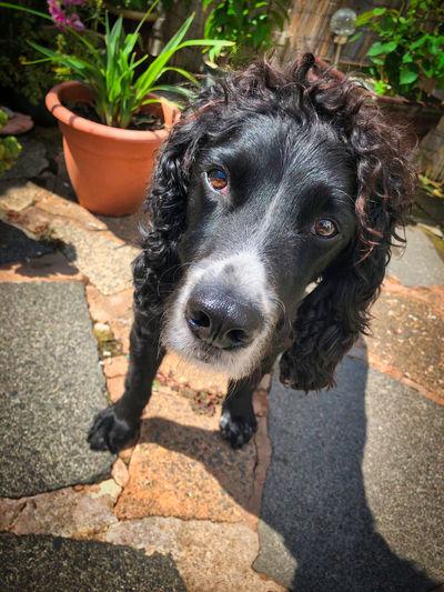High angle portrait of dog on cobblestone