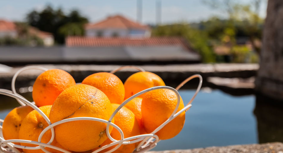 Close-up of orange fruits in swimming pool