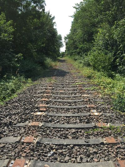 raleroad abondend industrial The Way Forward Tree Railroad Track Growth Clear Sky Diminishing Perspective Tranquil Scene Nature Outdoors Beauty In Nature Vanishing Point Day Plant Long Green Color Straight Surface Level Tranquility Gravel