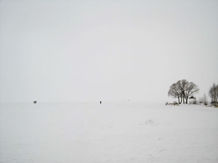 Beauty In Nature Clear Sky Cold Temperature Day Landscape Nature No People Outdoors Pereslavl'-zakessky Russia Sky Snow Tranquil Scene Tranquility Tree White Desert Winter