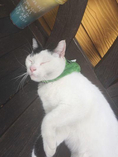 Lazy cat Nap