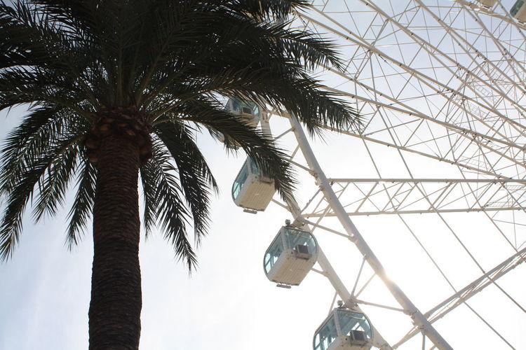Fun Giant Wheel High Palm Tree SPAIN Big Wheel Hanging Tree