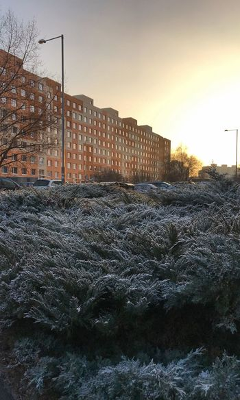Exploring Prague New Years Eve 2016 HDR Frozen Plants Sunset IPhoneography Cold Day