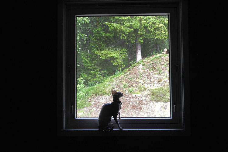 Animal Animal Themes Cat Day Domestic Domestic Animals Domestic Cat Don Sphynx Donskoy Cat Feline Glass - Material Indoors  Mammal Nature No People One Animal Pets Plant Sfinks Sphinx Transparent Tree Vertebrate Window