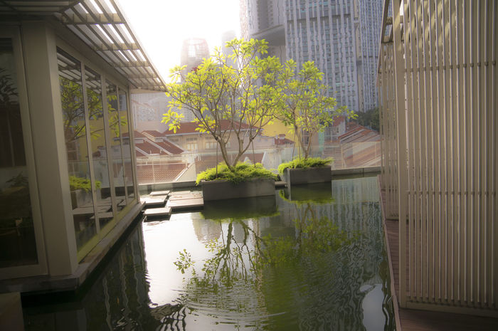 Urban Tranquility Tree Built Structure Building Exterior Architecture Outdoors Water Day City Nature Sky