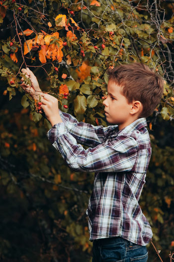 Boy in checkered shirt gathers rose hips in autumn forest